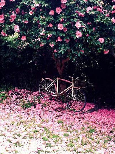 Lovika Weekly - I must have flowers, always and always | Spring mood